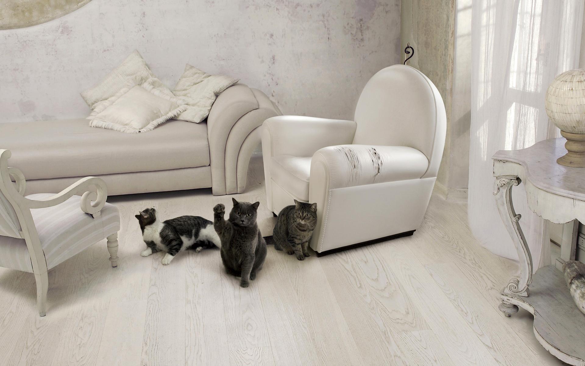 Кошка дерет мебель? Отучить кошку царапать мебель просто 9