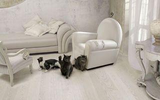 Заставки кошка, мебель, кот