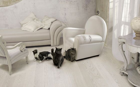 Фото бесплатно кошка, мебель, кот