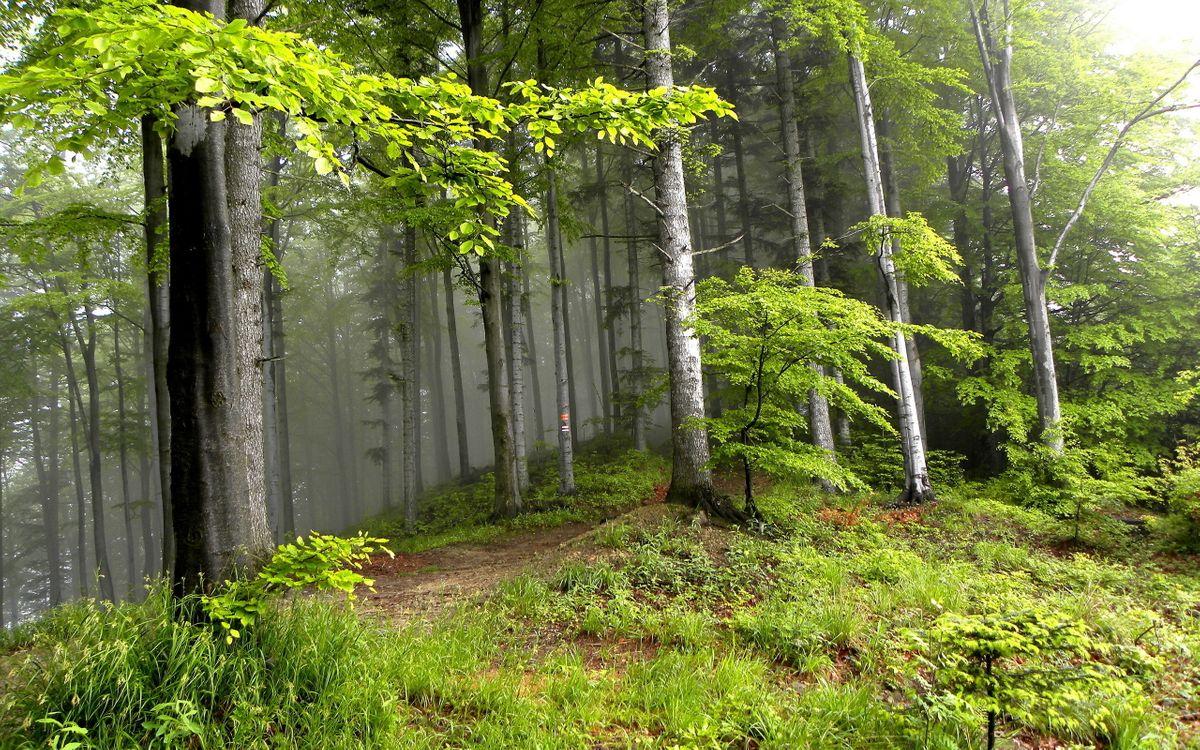 Фото бесплатно деревья, природа, лето - на рабочий стол