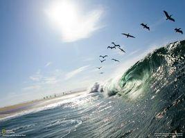 Фото бесплатно волна, океан, чайки