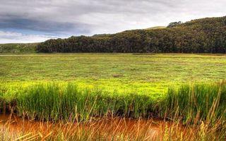 Фото бесплатно болото, трава, камыши