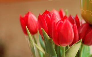 Фото бесплатно букет, тюльпаны, красные