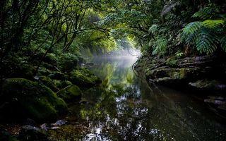 Бесплатные фото джунгли,деревья,ветки,лес,река,вода,туман