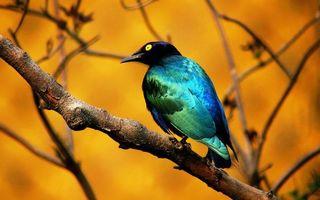 Бесплатные фото глаза,желтые,перья,клюв,крылья,хвост,ветки