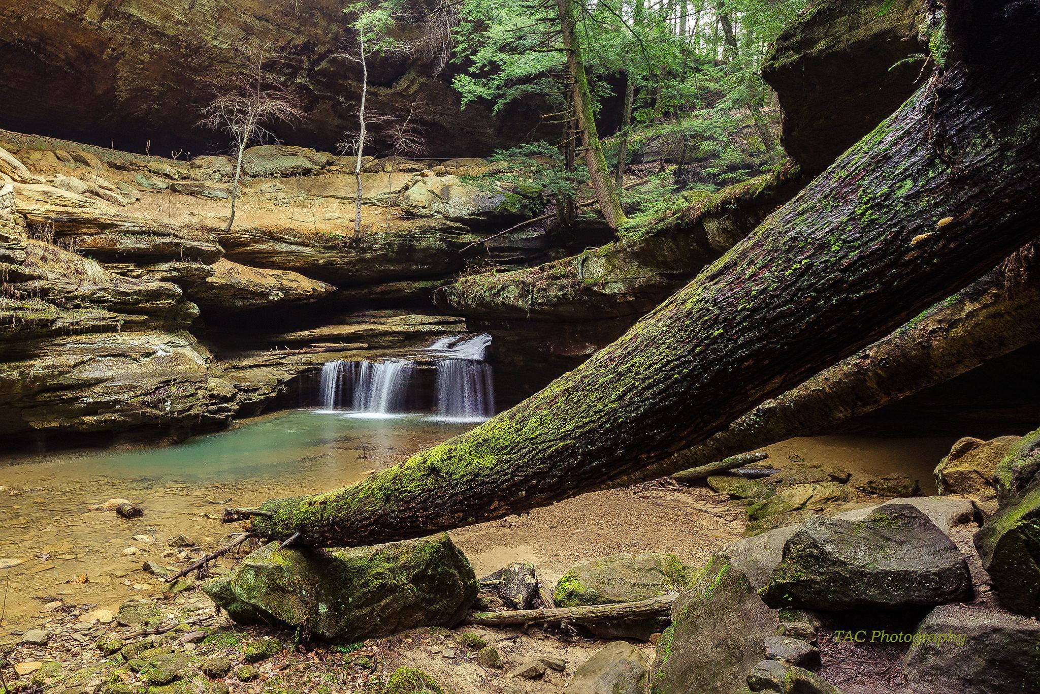 Hocking Hills State Park, Ohio, лес