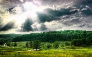 Бесплатные фото лес,деревья,трава,дороги,машина,небо,тучи