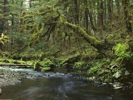 Фото бесплатно лес, природа, быстрое