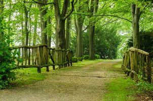 Фото бесплатно лес, парк, дорога, деревья, пейзаж