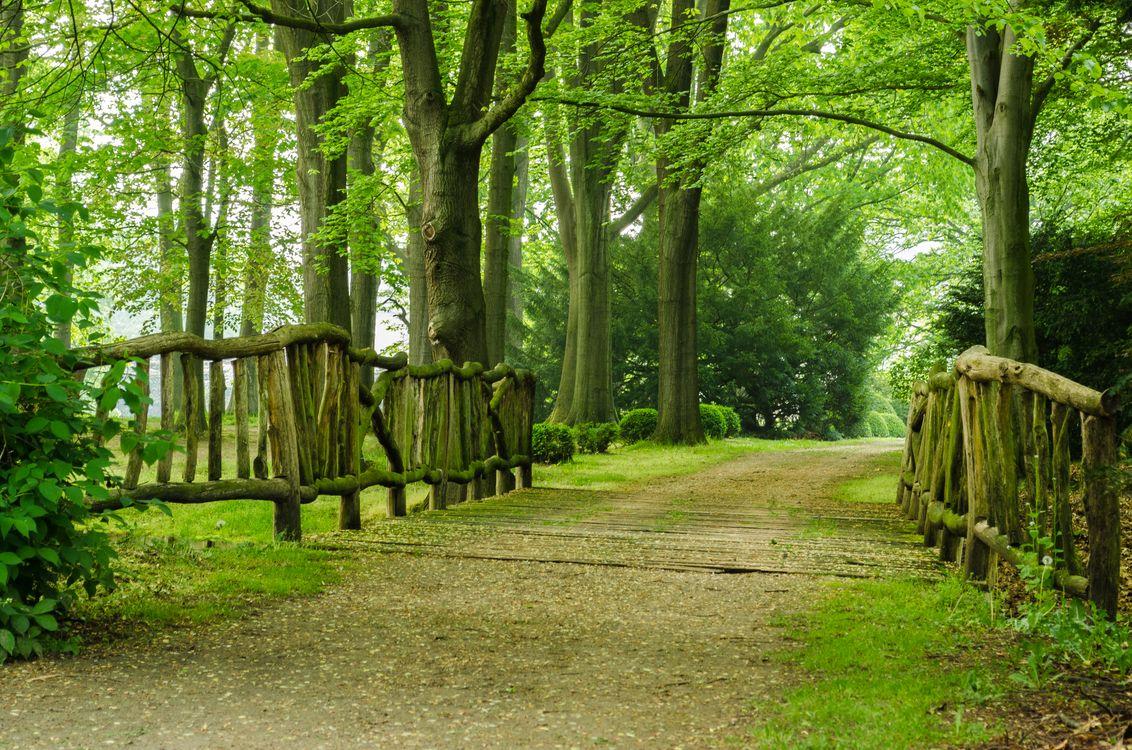 Фото бесплатно лес, парк, дорога, деревья, пейзаж, пейзажи