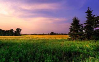Бесплатные фото луг,елка,дерево,трава,цветы,небо,облака