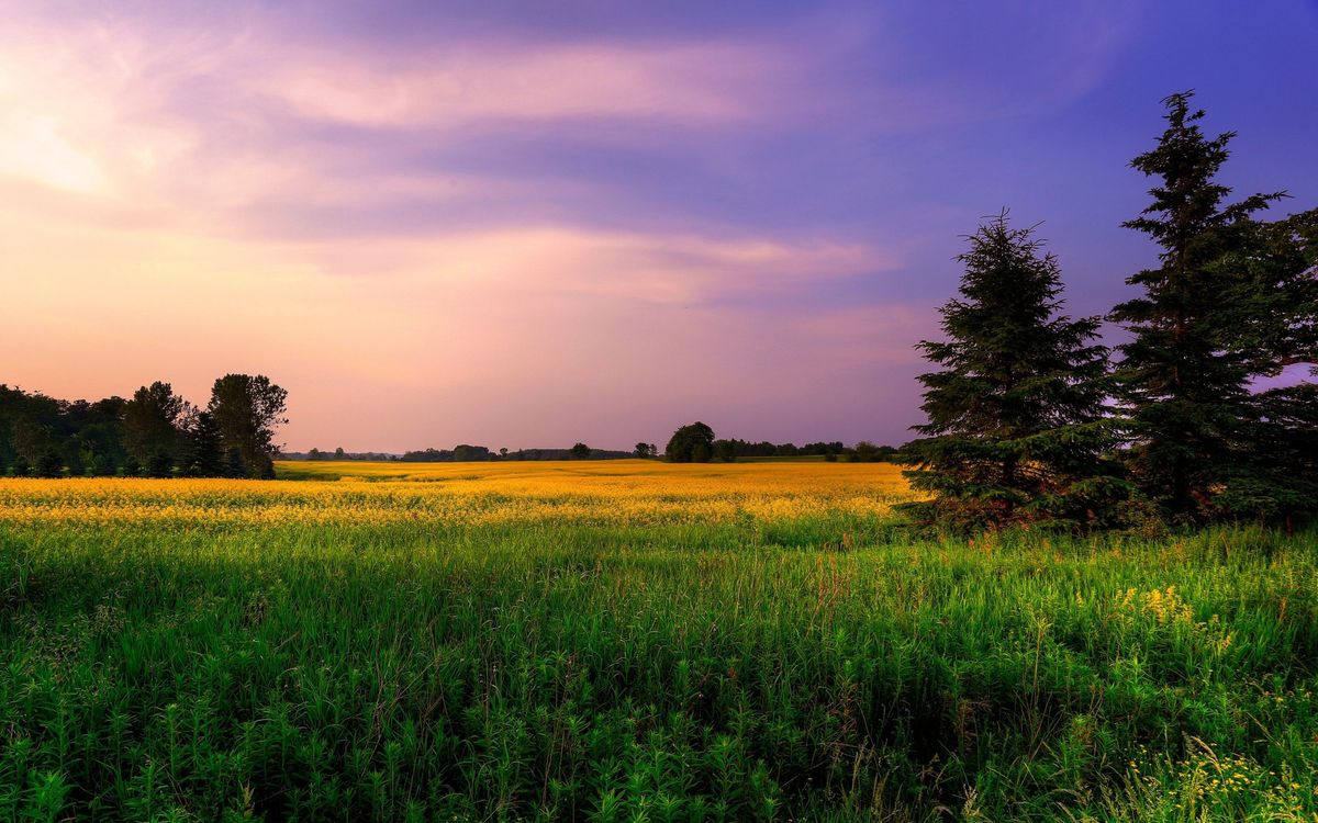 Photos for free meadow, tree, grass - to the desktop