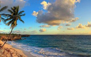 Бесплатные фото океан,вода,пальмы,небо,жара,лето,природа