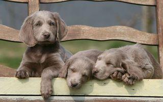 Бесплатные фото пес,щенок,щенки,лавочка,скамейка,мохнатые,шерсть