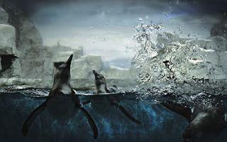 Фото бесплатно пингвины, плавают, море