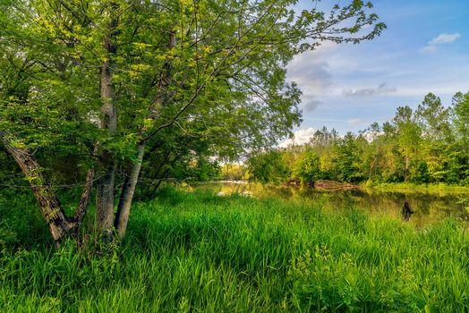 Фото бесплатно река, деревья, лето