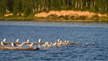 Бесплатные фото река,вода,рябь,птица,лес,деревья,берег