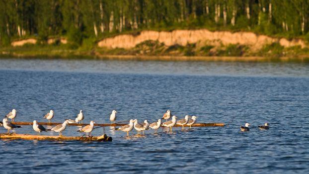 Фото бесплатно река, вода, рябь