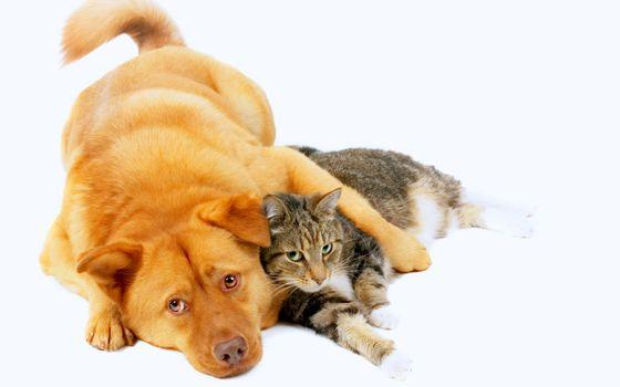 Бесплатные фото собака,кошка,друзья,животные