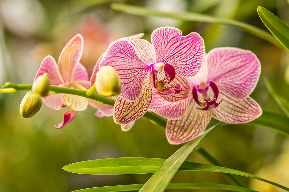 Обои цветы, орхидея, ветвь на телефон   картинки цветы