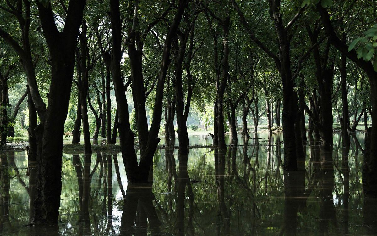 Фото бесплатно вода, деревья, стволы, климат, трава, зелень, островки, природа, природа