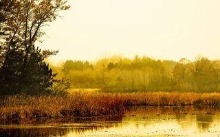 Бесплатные фото вода,река,озеро,лес,деревья,трава,болото