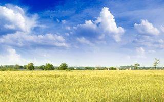 Заставки поле,простор,пейзажи