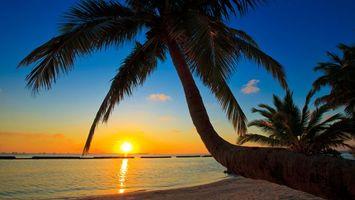Бесплатные фото закат,солнце,небо,море,песок,пальмы,пейзажи