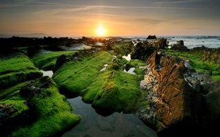 Фото бесплатно река, мох, горизонт