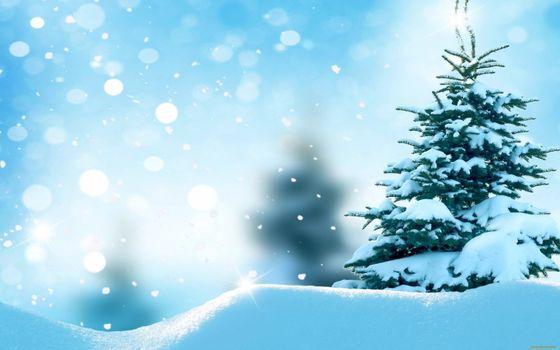 Заставки зимняя елка, сугробы, снег