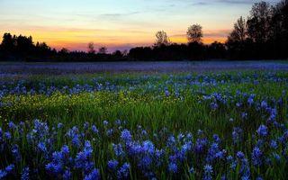 Фото бесплатно поле, цветы, закат