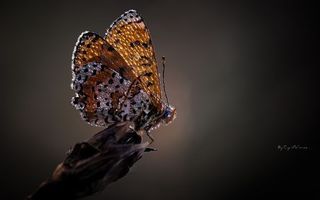 Photo free butterfly, wings, dew