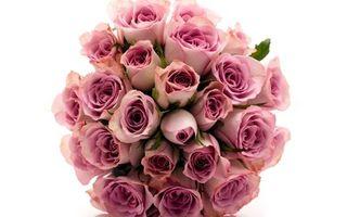 Бесплатные фото букет,розы,розовые,липестки,белый,фон,подарки