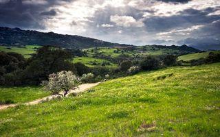 Фото бесплатно трава, небо, лучи