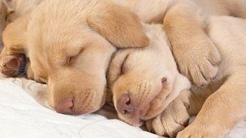 Фото бесплатно щенки, спять, двое