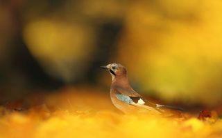Фото бесплатно клюв, глаза, крылья
