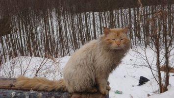 Бесплатные фото кот,пушистый,шерсть,хвост,лапы,морда,улица