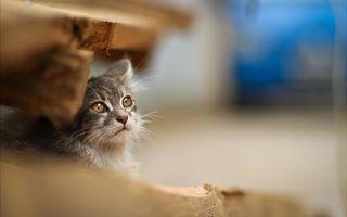 Фото бесплатно глаза, кошки, деревянные
