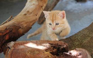 Фото бесплатно котенок, рыжий, морда