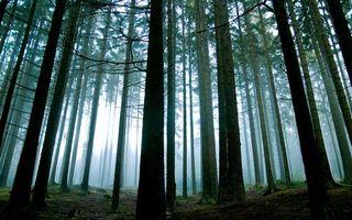Бесплатные фото лес,стволы,деревья,ветки,туман,небо,природа