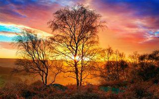 Фото бесплатно осень, деревья, кусты