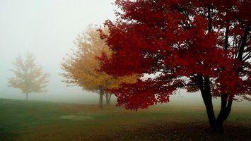 Бесплатные фото осень,туман,деревья,ветер,трава,листья,крона