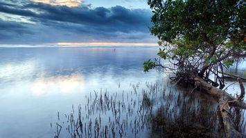 Бесплатные фото озеро,коряга,дерево,листва,небо,облака,природа