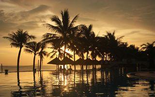 Фото бесплатно пальмы, пляж, деревья