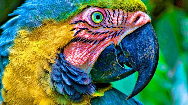 Photo free parrot, beak, feathers
