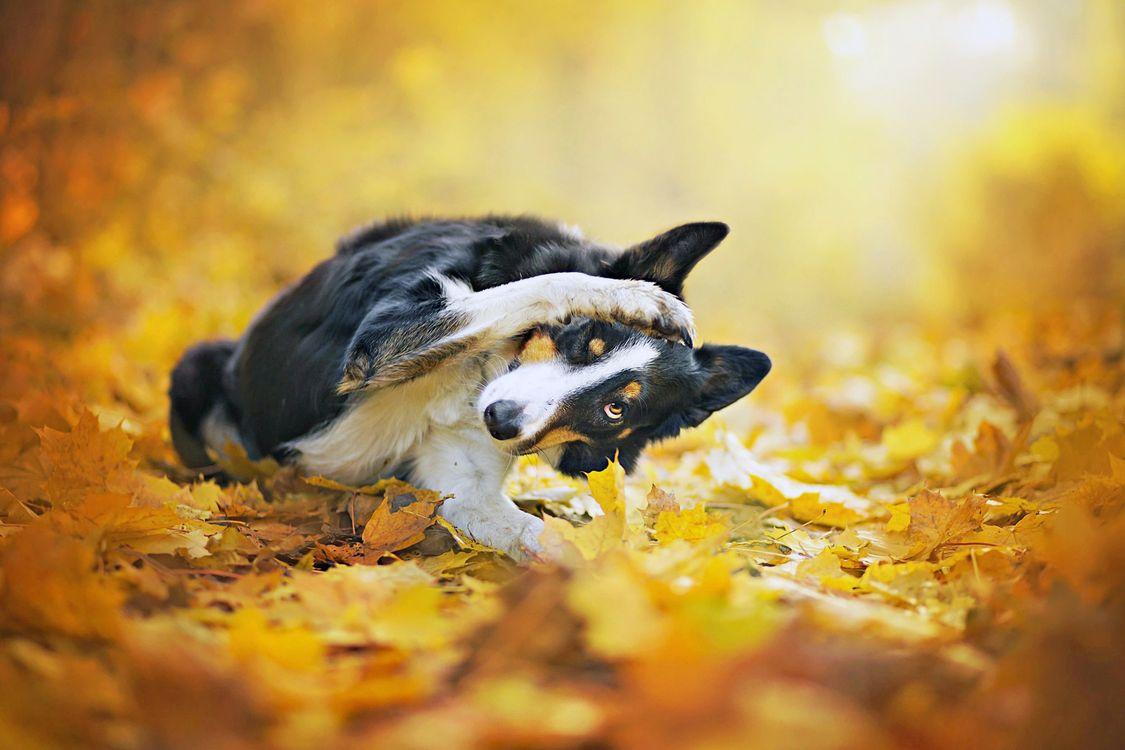 Обои собака, листья, и всё картинки на телефон