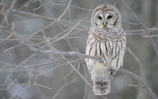 Бесплатные фото сова,клюв,глаза,лапы,хвост,перья,ветки