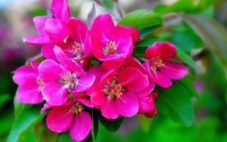 Заставки цветки,лепестки,тычинки,листья,ветки,розовые,весна