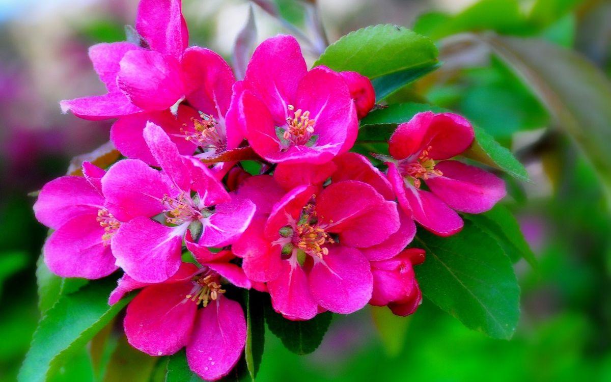 Обои цветки, лепестки, тычинки картинки на телефон