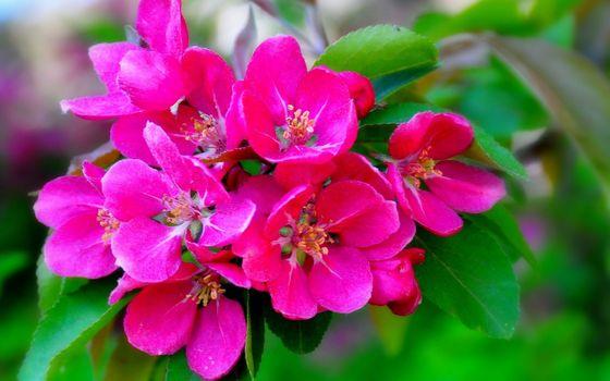 Photo free flowers, petals, stamens